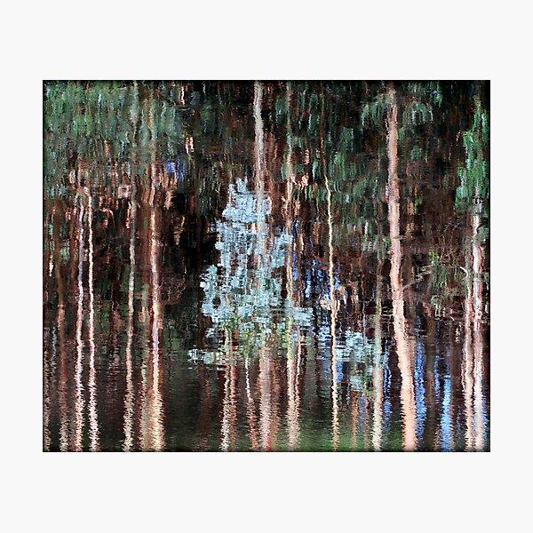 ~ Liquid Eucalypts ~ Photographic Print