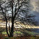 Winter sun by Tom Gomez