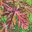 Paw Paw Leaf In Colour by Margaret Stevens