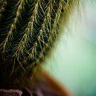 Cactus by TyTheTerrible