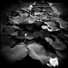 Lotus Pond by Sue Hammond
