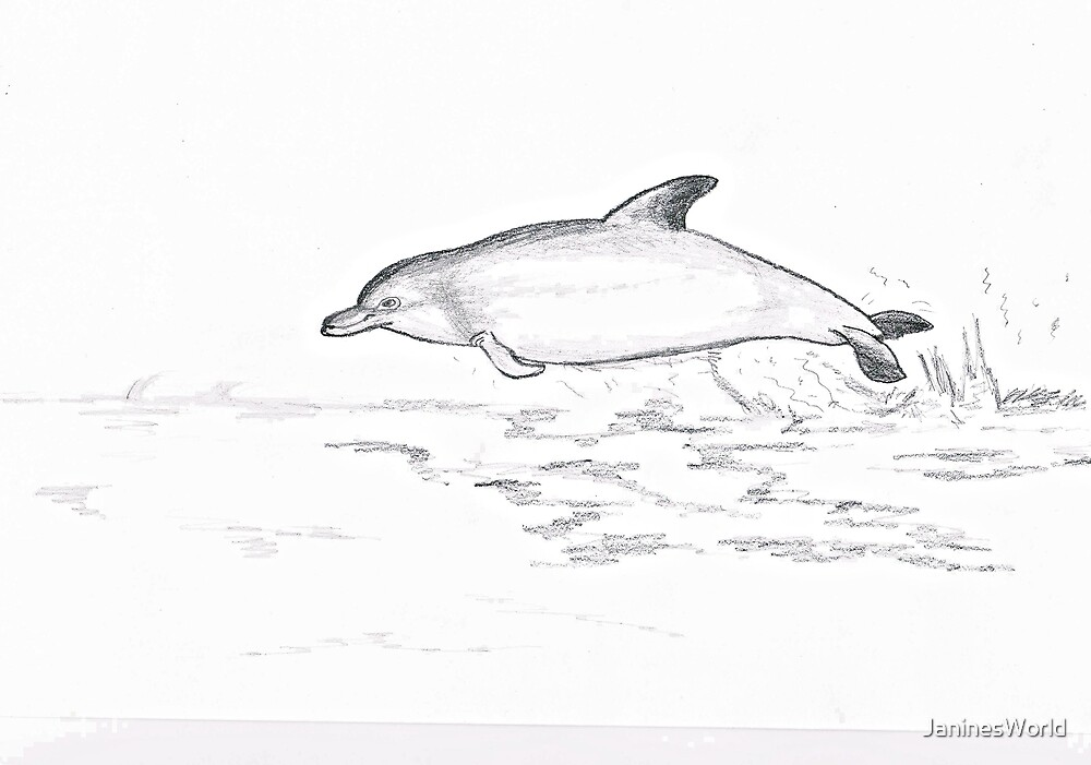 Dolphin by JaninesWorld