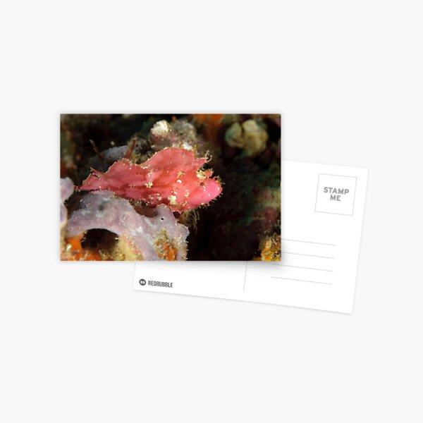 Leaf scorpionfish - Taenianotus triacanthus Postcard