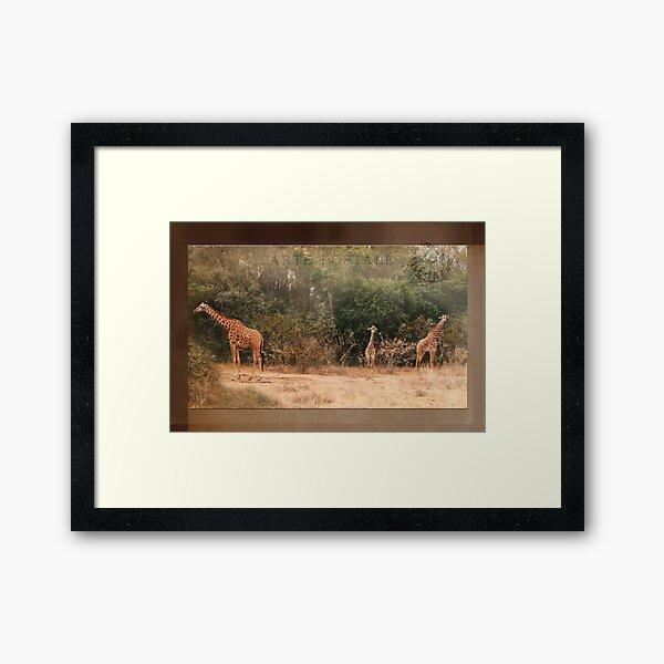 Giraffes ~ Carte Postale Framed Art Print