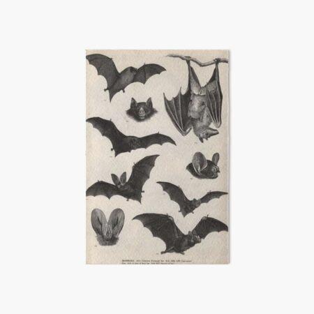 vintage victorian bat illustrations Art Board Print