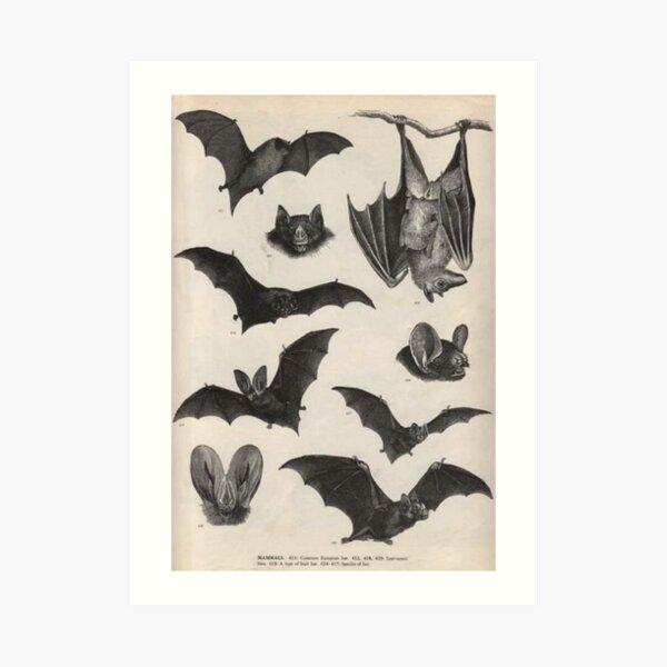 vintage victorian bat illustrations Art Print
