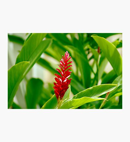Tropical Red Photographic Print