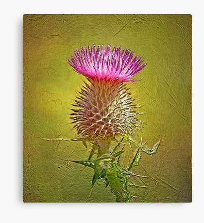 Spear thistle on gold Canvas Print