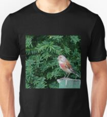 An uncommon Common Linnet T-Shirt