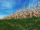 Corn Rows by Marcia Rubin
