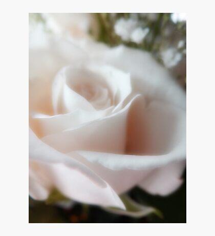Rose for a friend (ravensky) Fotodruck