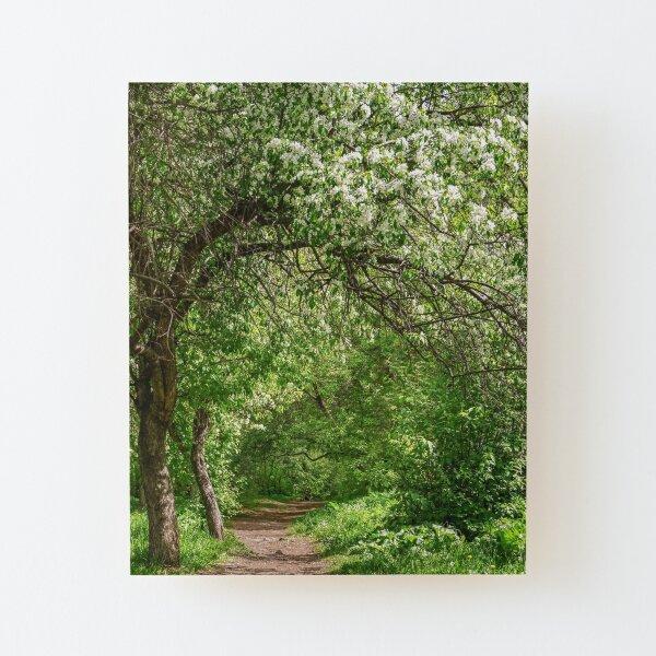 Spring path Wood Mounted Print