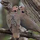 Romantic doves by Anthony Goldman