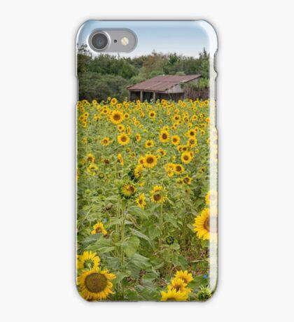 Sunflower Field iPhone Case/Skin