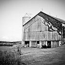 Rural Barn  by Marcia Rubin