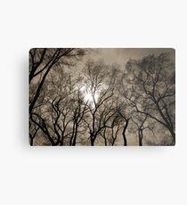 Sun Through Trees Metal Print