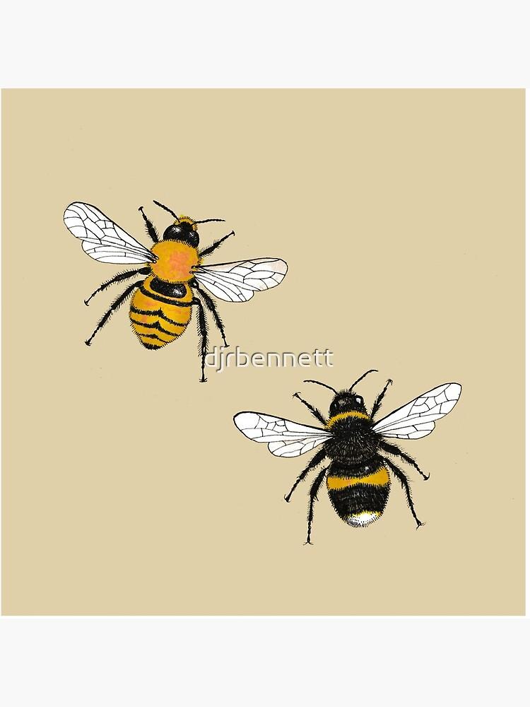 Bumblebee Illustrations by djrbennett