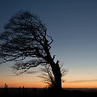 Lone tree on Raddon Top by Pete Hemington