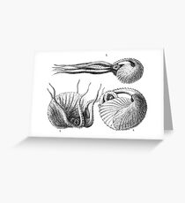 Vintage Natural History Mollusca Illustration Greeting Card