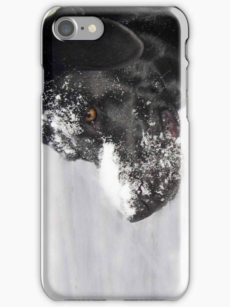 Black Labrador by Kara Rountree