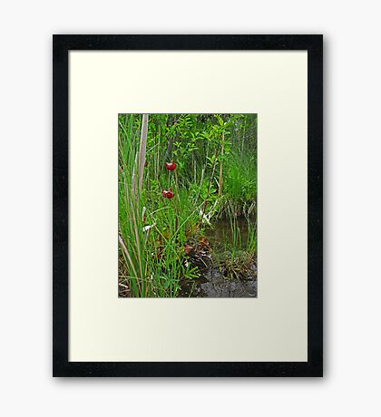 Red Water Flower Scene Framed Print