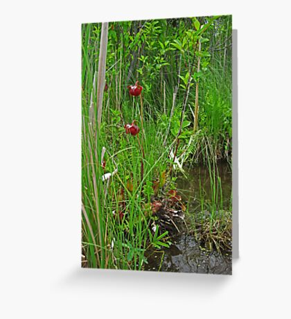 Red Water Flower Scene Greeting Card
