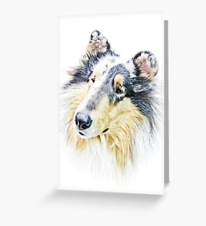 Beautiful Collie Greeting Card