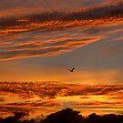Sunrise Flight by paulscar
