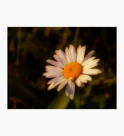 Dew a Daisy Fotodruck