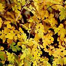 Autumn by Amit  Gairola