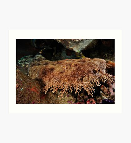 Ornate Wobbegong Shark Art Print