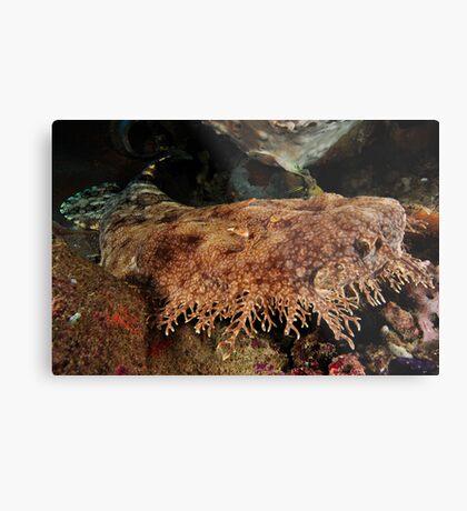 Ornate Wobbegong Shark Metal Print