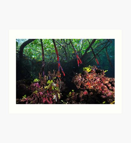 In The Mangroves Art Print