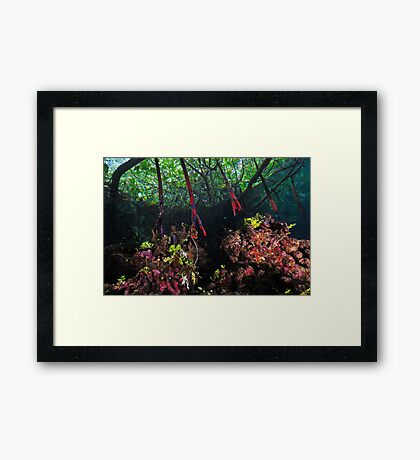 In The Mangroves Framed Print