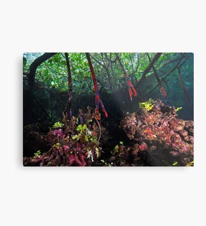In The Mangroves Metal Print