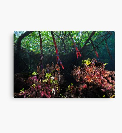 In The Mangroves Canvas Print