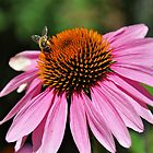 Busy Bee by JaninesWorld