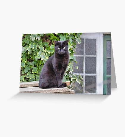 Pussy Greeting Card