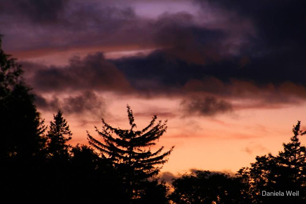 Evening Silhouettes by Daniela Weil
