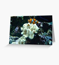 Clown Fish Among the Coral Greeting Card