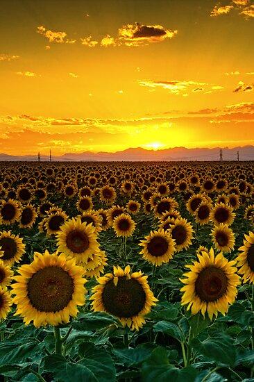 Golden August by John  De Bord Photography