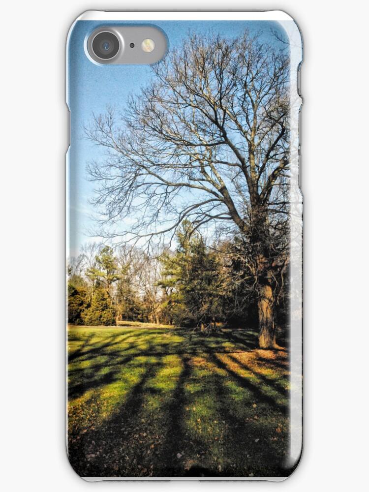 Their Tree by Robin Black