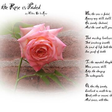 When the Rose is Faded by billcannon