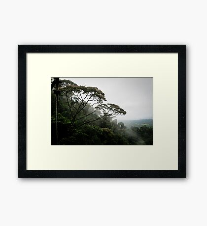 View from a hanging bridge - Costa Rica Framed Print