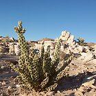 Desert Oasis by djackson