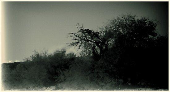 Desert Brush by TPKid
