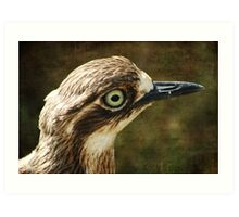 Bush Thick Knee Art Print
