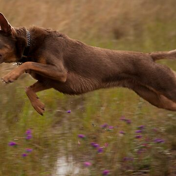 Gus leaps by juxtaposer