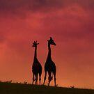 Sunset Giraffes by wahboasti