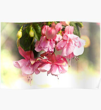 Pink Ladies Poster